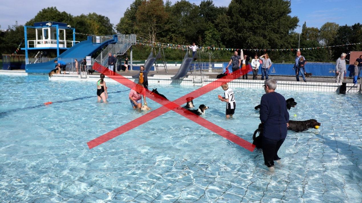 augustus 2020 | GEEN hondenzwemmen
